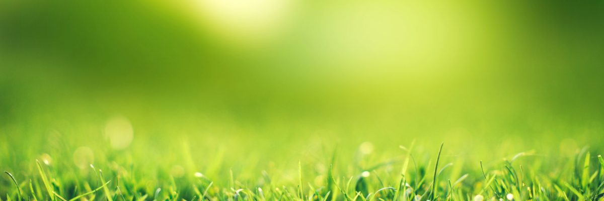 spring-nature-concept-closeup-green-grass-field-with-blurred-park-sunlight